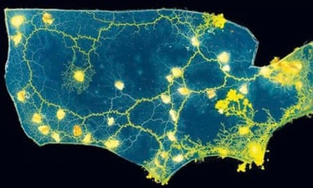 Slime mould maps the US road network
