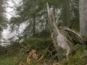 The sniper is above and slightly to the right of the brownish rotten wood