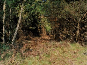Sniper under the twigs and branches on the left.Image 10 of 18