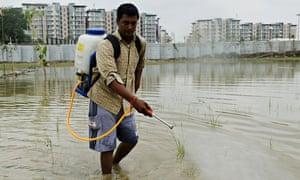 An Indian worker sprays pesticide to kil
