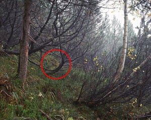The art of camouflage – spot the sniper