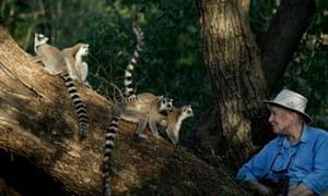 Alison Jolly with some of the many wild lemurs she studied in Madagascar