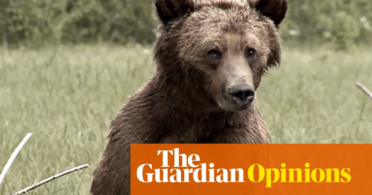Shame On The Trophy Hunters A Grizzly Bear Is Worth More Alive Than