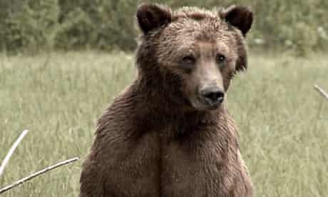 Cheeky the bear