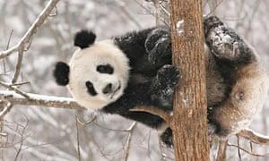 #CHINA-SHAANXI-HANZHONG-SNOW-ANIMALS (CN)