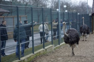 Visitors discovered a private zoo in the grounds President Yanukovich's residence.