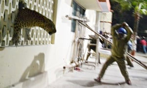 Leopard in Meerut hospital