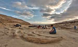 Whale fossil graveyard in Chile