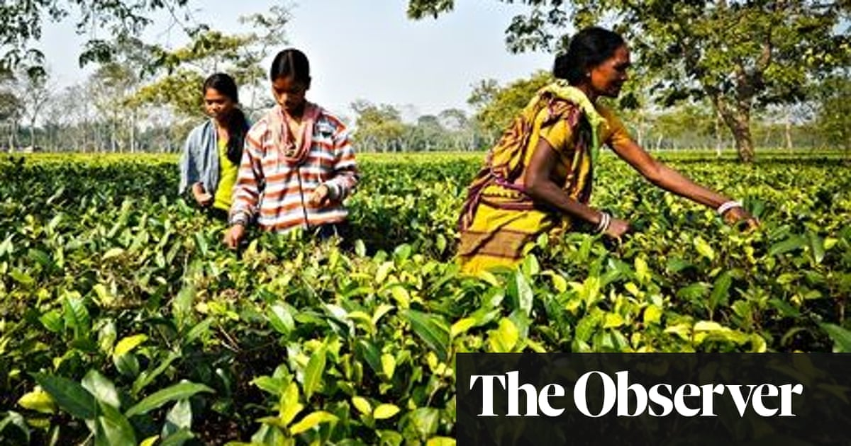 The tea pickers sold into slavery | Global development | The