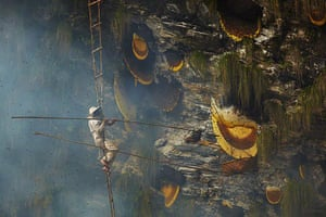 Honey hunters of Nepal: Honey hunter collecting from cliff face
