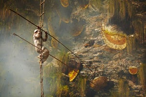 Honey hunters of Nepal: Honey hunter collecting from cliff face, Nepal