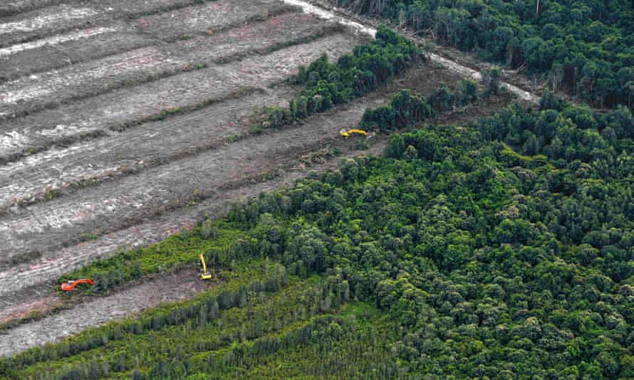 Greenpeace image of deforestation on Borneo