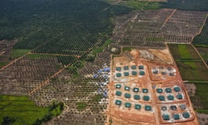 An palm oil plantation and company buildings inside the PT Karya Makmur Abadi Estate II palm oil concession.  PT  KMA II contains important areas of mapped orang-utan habitat and is a subsidiary of the Malaysian Kuala Lumpar Kepong Berhad (KLK) group.