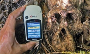 A Greenpeace investigation with FNPI documents an orangutan skull beside an oil palm plantation owned by PT Bumi Langgeng Perdanatrada, a subsidiary of BW Plantation Group, near Tanjung Puting National Park in Central Kalimantan.