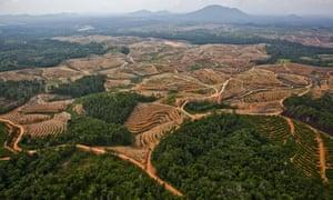 A network of access roads on former orangutan habitat inside the PT Karya Makmur Abadi Estate II palm oil concession. PT KMA II is a subsidiary of the Malaysian Kuala Lumpar Kepong Berhad (KLK) group.