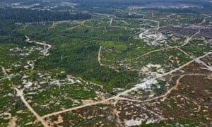 A patch of forested orang-utan habitat remains surrounded by the recent clearance of orang-utan habitat inside the PT Wana Catur Jaya Utama palm oil concession in Mantangai, Kapuas district, Central Kalimantan. PT  WCJU is a subsidiary of BW Plantation.