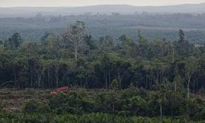 Excavators clear forest inside the PT Karya Makmur Abadi Estate II palm oil concession. PT KMA II contains important areas of mapped orangutan habitat and is a subsidiary of the Malaysian Kuala Lumpar Kepong Berhad (KLK) group.