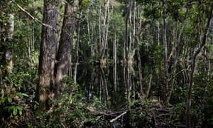 Forest in Tanjung Puting National Park. Tanjung Puting contains one of the largest remaining tropical peat swamp forests in the world, which is a critical habitat for orang-utans. Despite its protected status, Tanjung Puting is threatened by palm oil expansion.