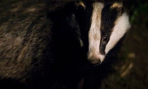 """David Cameron should now be taking a long hard look at this policy which has shamed his government. It was conceived for political, not practical reasons. It was carried out in an arrogant and careless fashion which has now been officially branded a failure,"" said Dominic Dyer, CEO of the Badger Trust and Policy Advisor to Care for the Wild."