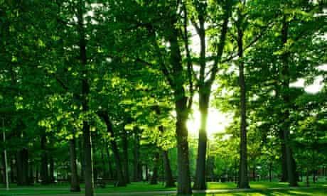 landscape,sunlight,park