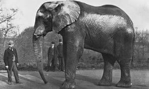 Heavy drinker: The original Jumbo at London Zoo, circa 1890.