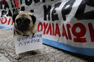 """A demonstrator's dog carries a banner that reads 'Tax the wolves"""" as protesters gather outside a tax office opposing auctions of homes by the state as a means of debt-management, in Athens, Greece, 03 February 2014."""