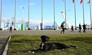 Stray dog Sochi