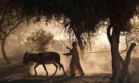 MDG : Chad, Sahel: a boy drives a donkey to a well, near Louri village