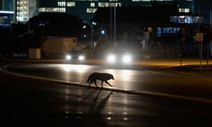 A stray dog crosses the road outside the Olympic Park. A pest control company has revealed it's been given a contract to exterminate the stray dogs in Sochi after one found its way into a rehearsal for opening ceremony last week