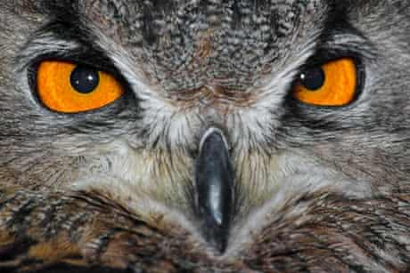 Don't let the Ominous Owl keep you up at night