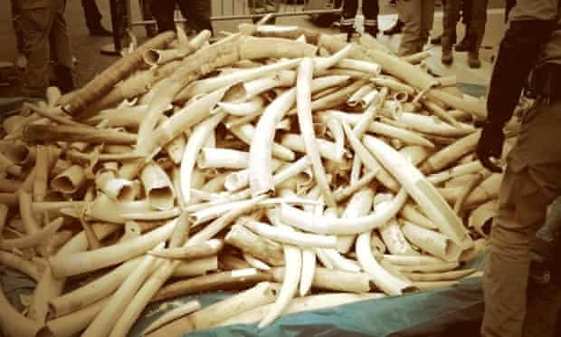French officials prepare to destroy the country's stockpile of illegal ivory.