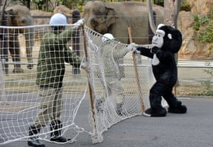 Zookeepers battle to keep the crazed animal under control