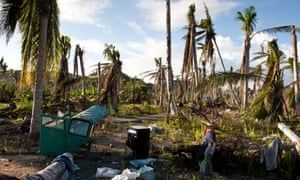 More 33 million coconut trees were destroyed by 195mph winds and will take between six to eight years to grow back.