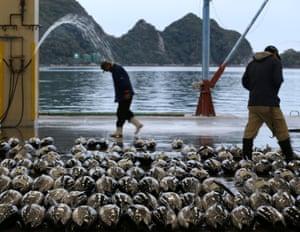 Buyers inspect the fresh tuna during the auction at Kiikatuura fresh tuna market in Nachikatsuura, Japan.