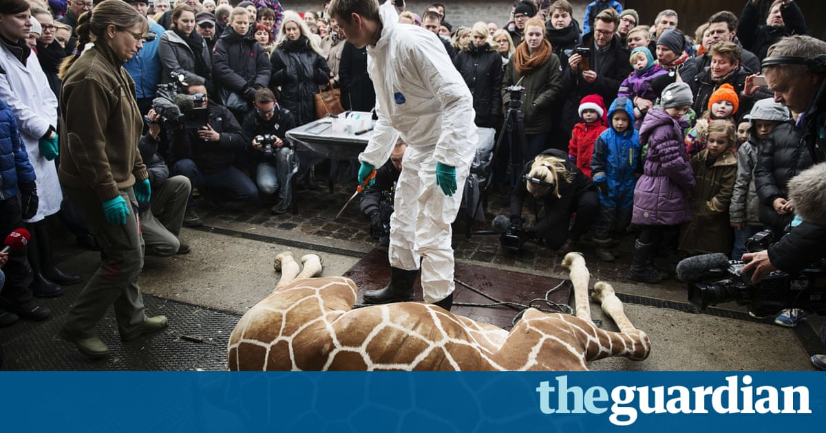 The death of Marius the giraffe – pictures from Copenhagen ... - photo#17