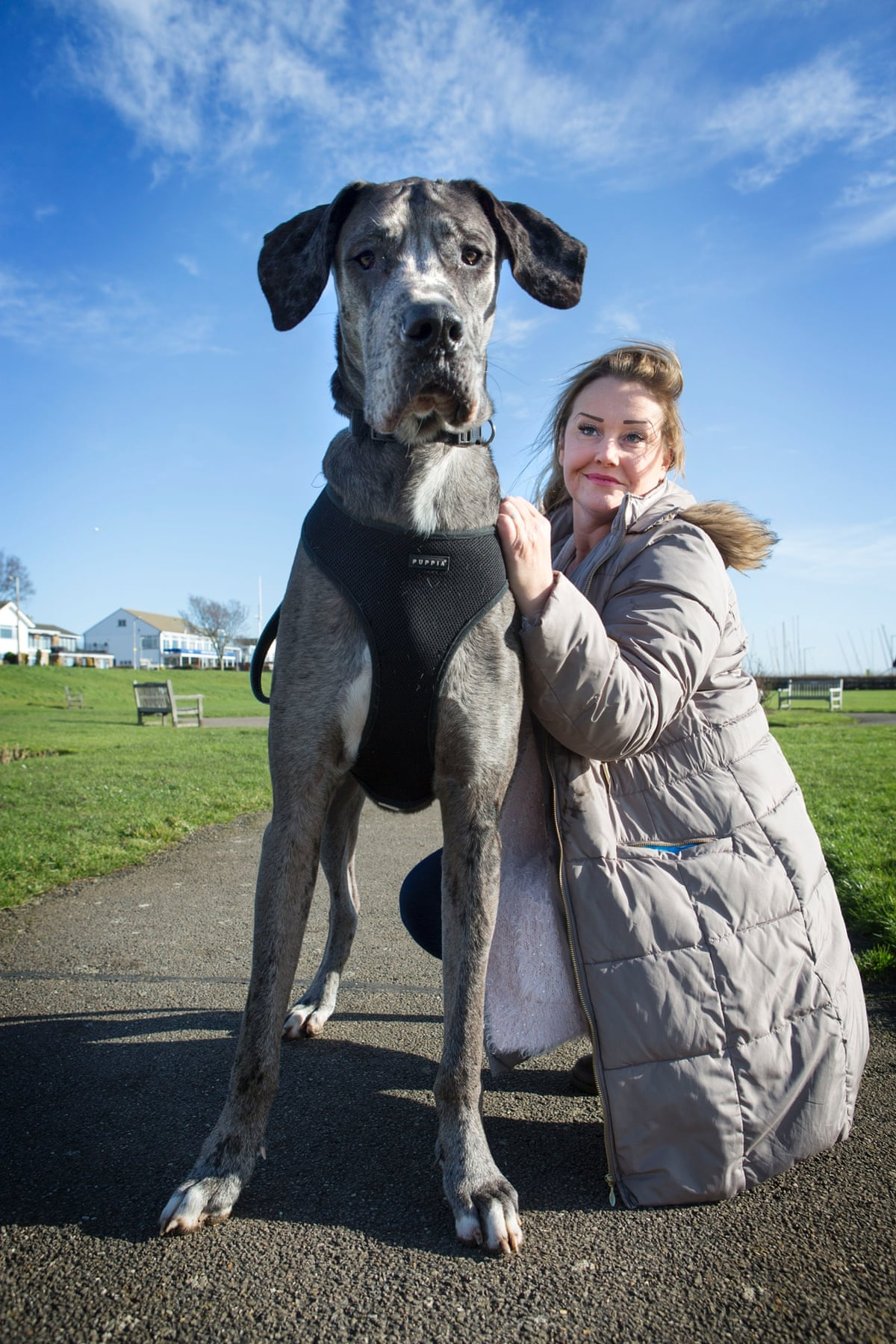 Freddy, Britains biggest dog in pictures | Life and style