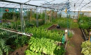 Live Better: Good for Ewe Community Garden