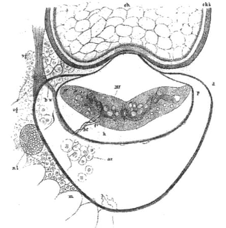 Lamprey spinal cord