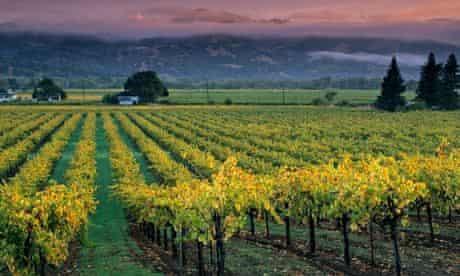 Sunrise light on vineyards