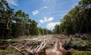 An access road is constructed in a peatland forest being cleared for a palm oil plantation in Aceh province, Indonesia.