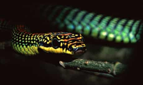 flying snakes study