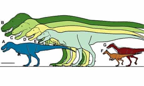 Tyrannosaur size comparisons
