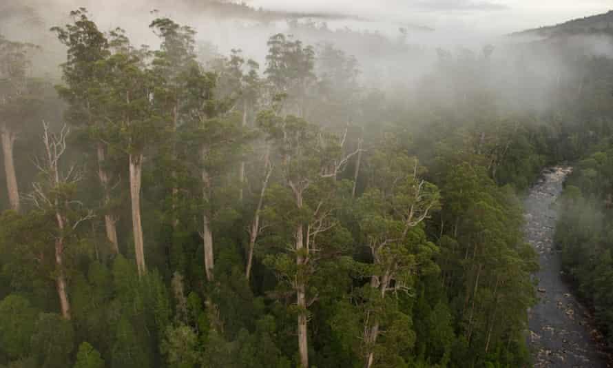 World heritage forest Tasmania