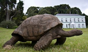 A 182-year-old tortoise at the home of the St Helena governor
