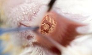 Silicon electronic