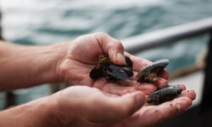 Water masterclass: Lance Wiffen with fresh mussels