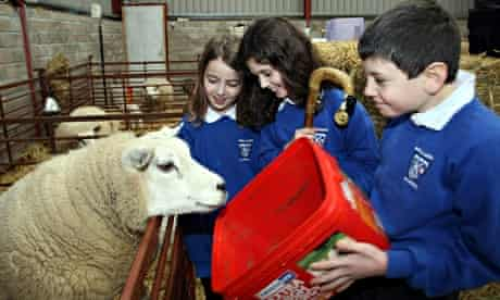 School children feeding sheep