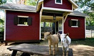 Social Goat Bed and Breakfast, Atlanta