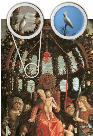 renaissance cockatoo