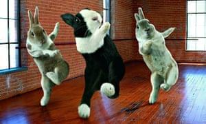 Ballroom Bunnies calendar - Aug 2011